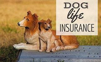 Dog grave (caption: Dog Life Insurance)