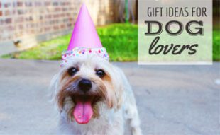 Dog with party hat on: Best Gifts for Dog Lovers