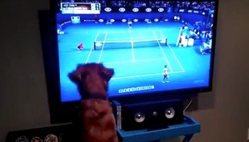 George the Dog Loves Watching Tennis on TV