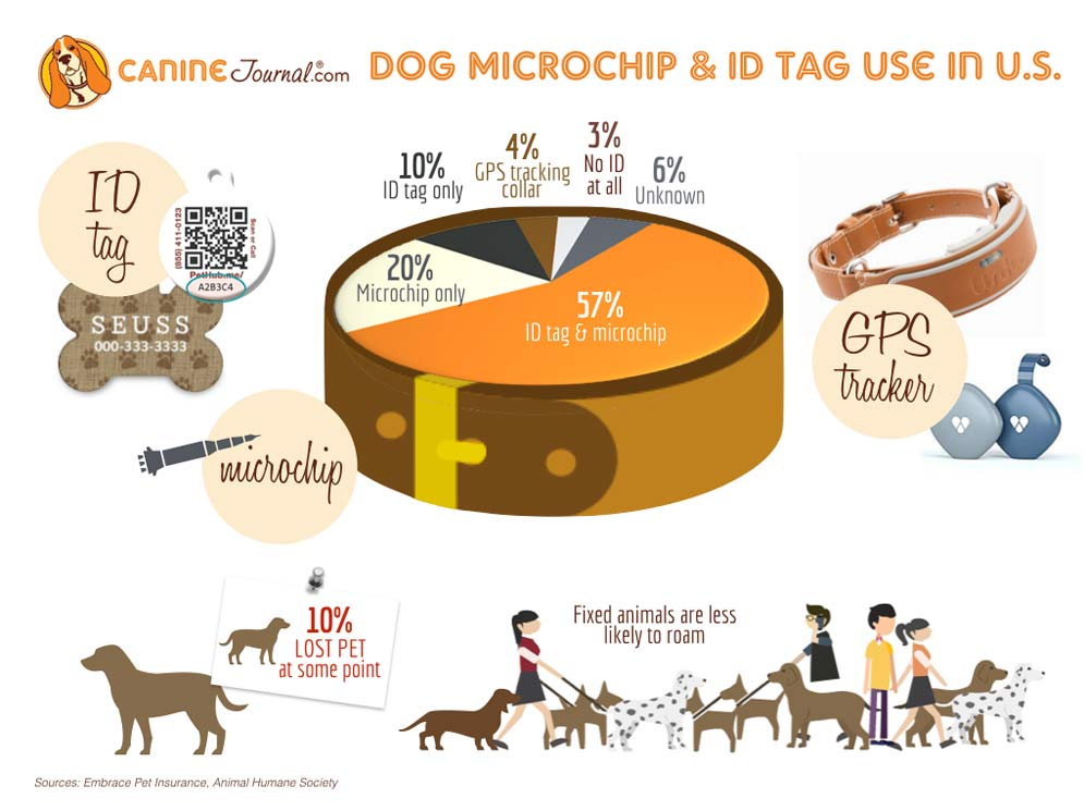 Why Microchip Your Dog? Preventing The Loss Of Your Pet