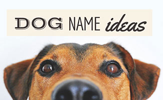 Dog Name Ideas For Every Type Of Dog Caninejournal Com