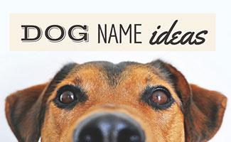 Dog's face (caption: dog name ideas)
