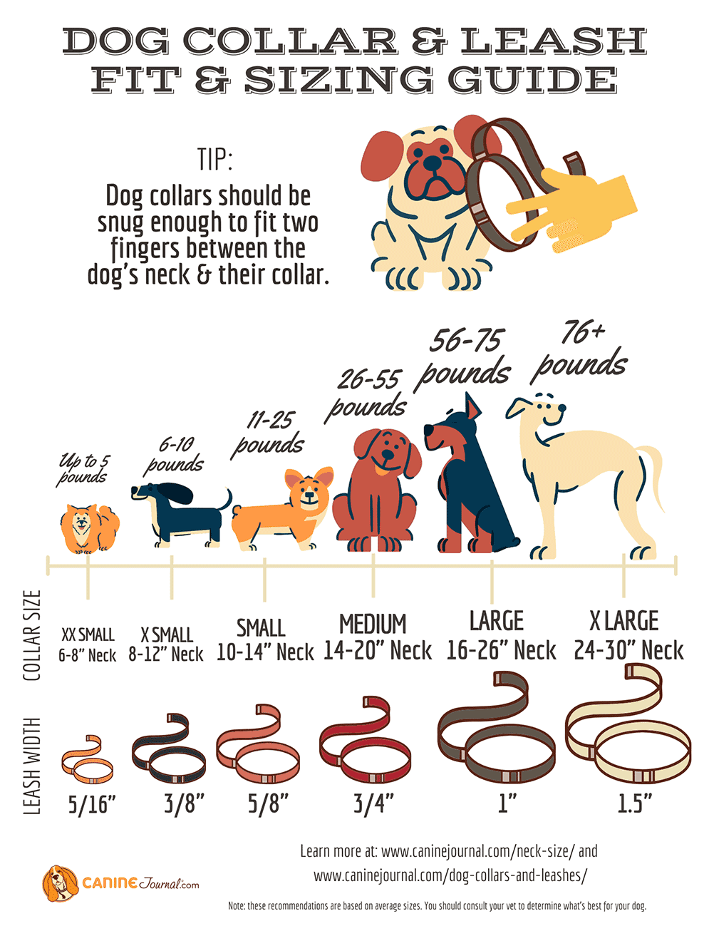 Dog Collar And Leash Size Guide Infographic