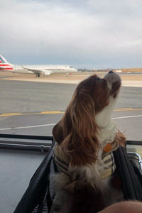 Dog on runway next to plane