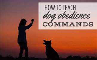 Dog sitting with owner doing trick in sunset (caption: How To Teach Your Dog Obedience Commands)
