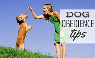 Girl training dog with treat (caption: Dog Obedience Tips)