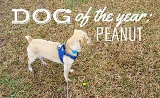 Peanut in the park: Fitbark Dog Interview with Peanut
