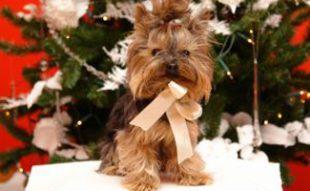Dog on Christmas Day