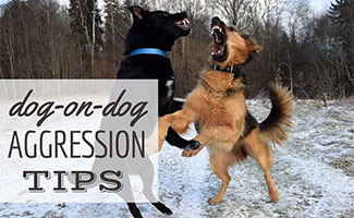 2 dogs fighting (caption: dog on dog aggression tips)