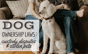 Dog sitting with parents (caption: Dog Ownership Laws: custody disputes and stolen pets)