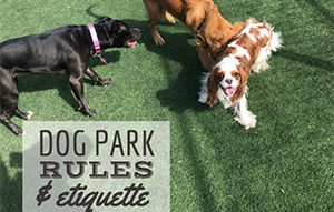 3 dogs sniffing each other in dog park (caption: Dog Park Rules And Etiquette)