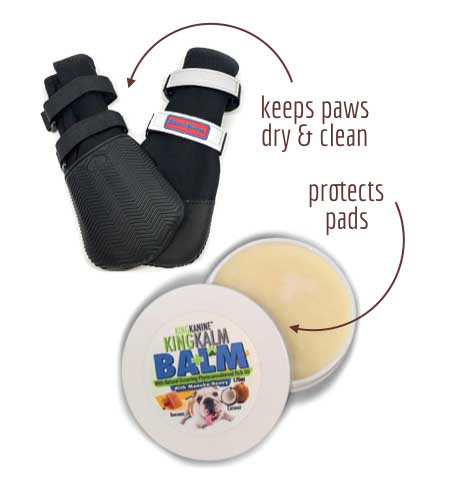 Products to protect dog paws