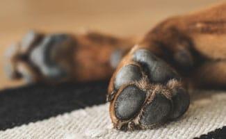 Dog paw pad