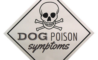 Symptoms of Dog Poisoning Signs