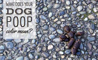 What Does Dog Poop Color Mean Caninejournal Com