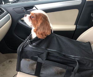Dog in carrier with head poking out