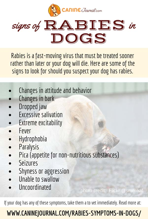 Signs Of Rabies In Dogs Infographic