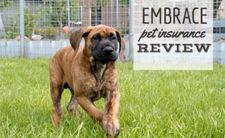 Bloodhound dog running in grass (caption: Embrace Pet Insurance Review)