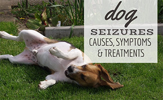 Dog laying on back in grass (caption: Dog Seizures: Causes, Symptoms And Treatments)