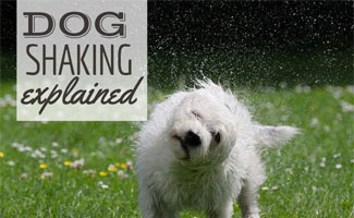 Dog shaking water off (caption: Dog Shaking Explained)