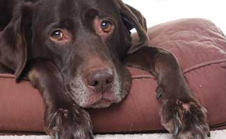 how to treat a poisoned dog caninejournal