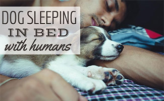 Man sleeping next to dog in bed (caption: Dog Sleeping In Bed With Humans)