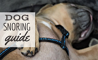 Dog sleeping on back (Caption: Dog Snoring Guide)
