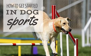 Dog jumping agility (caption: How To Get Started In Dog Sports)