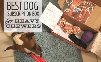 Barley with Bullymake box (caption: Best Dog Subscription Box For Heavy Chewers)