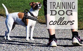Dog with trainer (caption: Dog Training Collar)