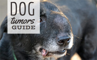 Dog Tumors: What You Need to Know