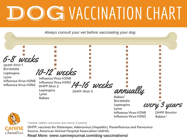 Dog Vaccination Time Table