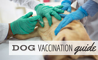 Dog being given shot by vet(caption: Dog Vaccination Guide)