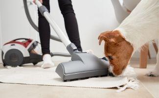 Dog sniffing vacuum on white rug