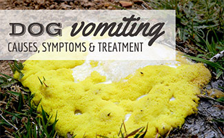 Dog's vomit in grass (caption: Dog Vomiting Causes, Symptoms and Treatment)