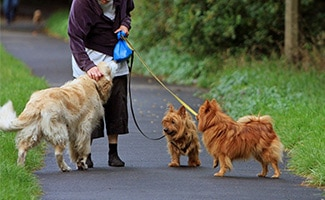 Woman walking 3 dogs