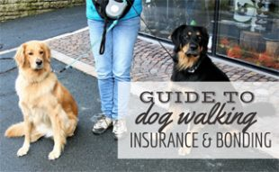 Girl walking two dogs on leashes (caption: guide to dog walking insurance and bonding)