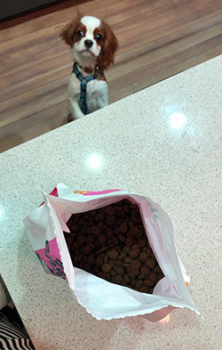 Bag of Jinx dog food open with young dog begging