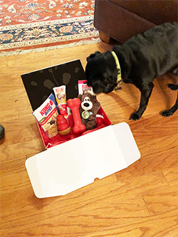 Dog sniffing Kong Monthly Box