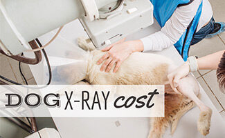 Lab getting xrayed at vet office (Caption: Dog X-Ray Cost)