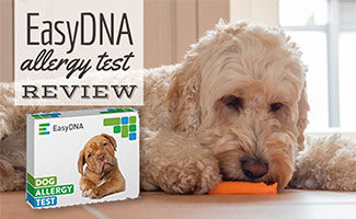 Dog on floor eating carrot next to EasyDNA test kit (caption: EasyDNA Dog Allergy Test Review)