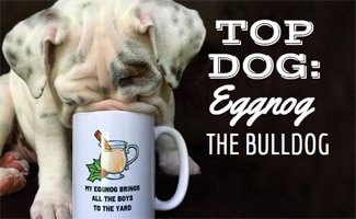 Eggnog the bulldog drinking eggnog out of a mug