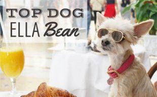 Ella Bean the Dog at cafe