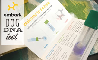 Embark DNA Test tube: Embark DNA Test Reviews