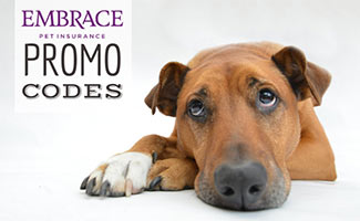 Dog laying down and looking up (caption: Embrace Pet Insurance Promo Codes)