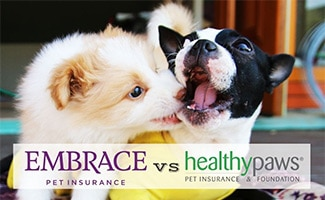 Two dogs playing (Caption: Embrace vs Healthy Paws logos)