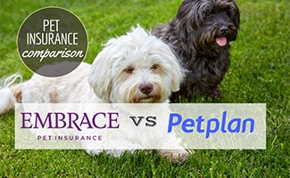 Two small dogs sitting together on grass (Caption: Pet Insurance Comparison Embrace vs Petplan)