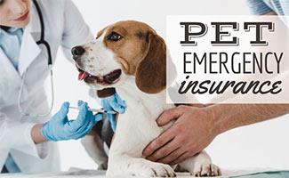 Dog getting shot at the vet (caption: Emergency Pet Insurance)