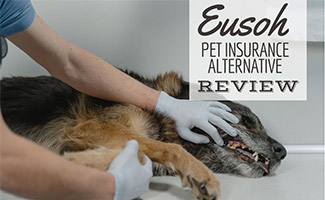 Dog's mouth being examined by a vet (caption: Eusoh Pet Insurance Alternative Review)