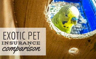 Pet parrot in birdcage